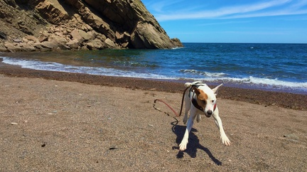 Running Free -- Rover does a happy dance on Meat Cove Beach at the northern tip of Nova Scotia
